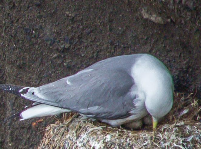 Island Snaefellsnes ruv-9920
