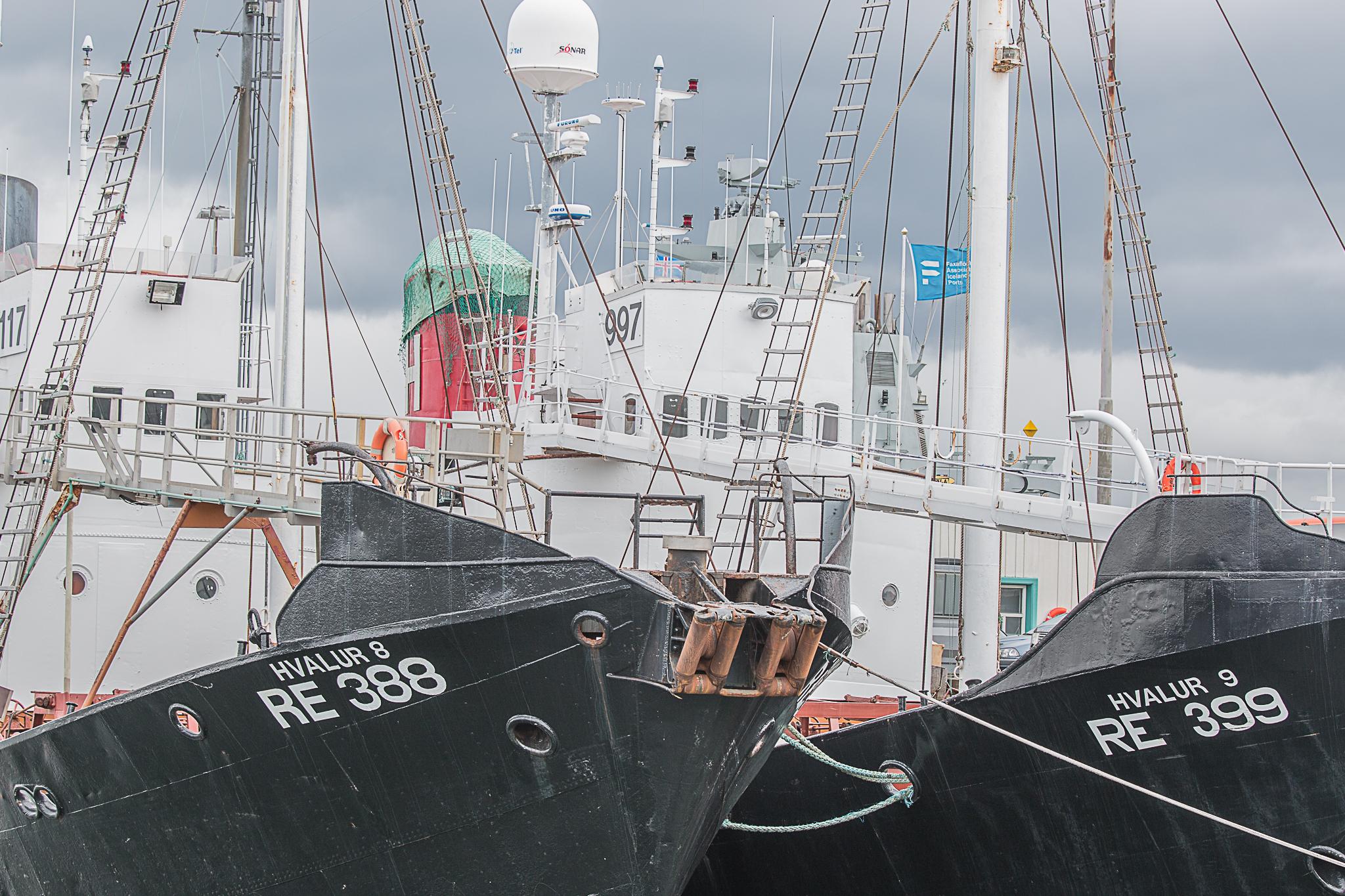 Island Valbåtar-2053
