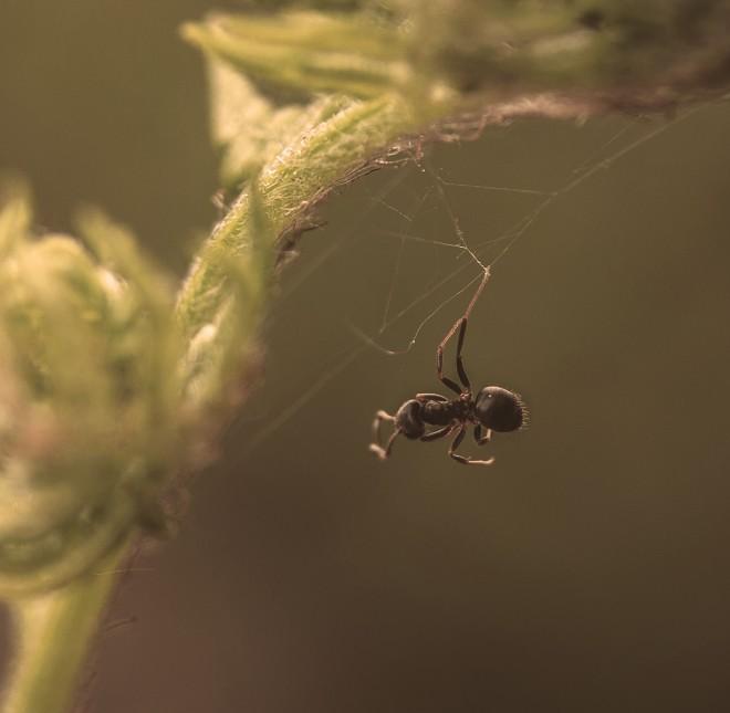 Myra i spindeltråd2 21 maj-1 (kopia)