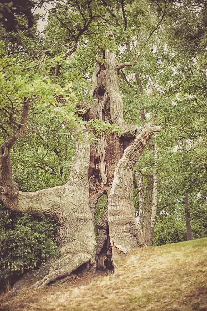 sprucket träd-
