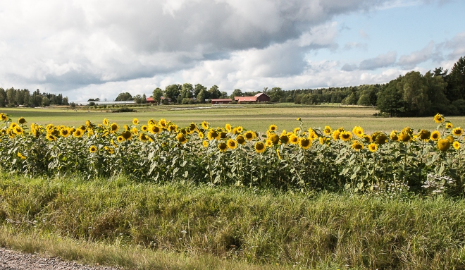 Skillebyholm-4205-2