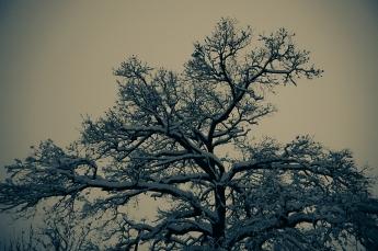 träd-7276
