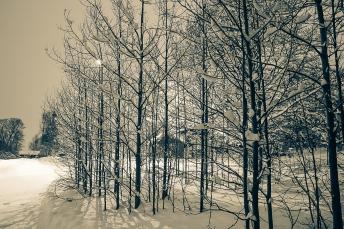 träd-7284