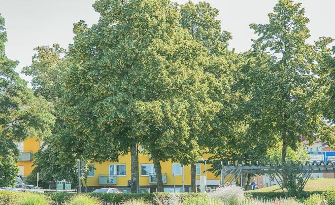 gula huset-8821