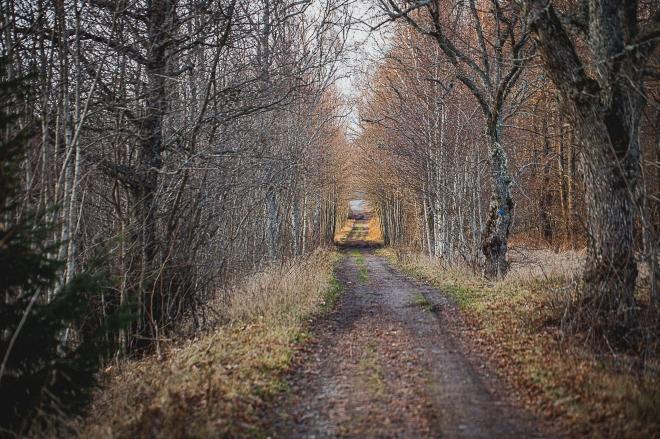 skogsväg-0007