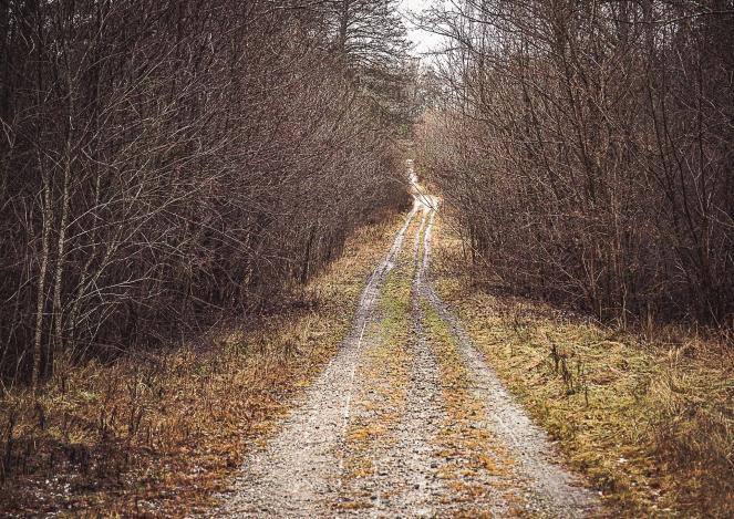 skogsväg-0079
